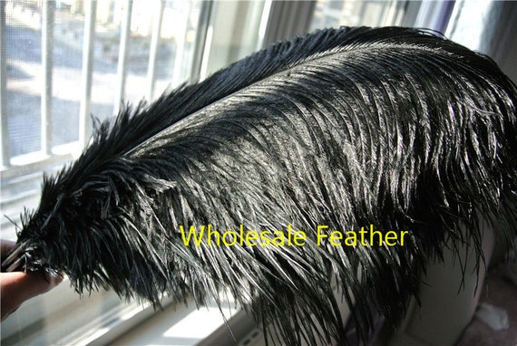 Pcs black ostrich feather plumes for wedding