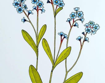"Forget Me Not Botanical Illustration - ORIGINAL - 4"" x 6"" Drawing"