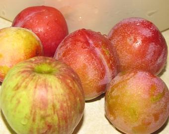 Food Photo, Apples and Plums Photos, Fruit Photo, Home Decor, Food Photo, Fine Art Print, Still Life