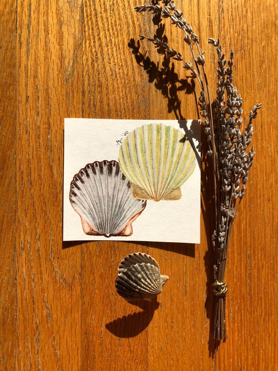 Miniature Scallop Shell Watercolor Painting