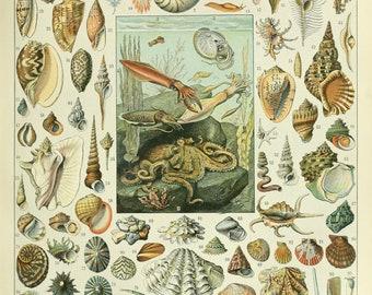 Mollusques by Adolphe Millot French Poster Vintage Home Decor Vintage Art, Sea Shell Print, Botanical Print Illustration, Bath Home Decor