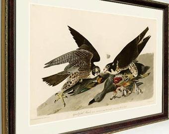 Audubon Bird Print Framed Falcon Hawk