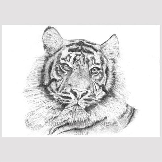 Crayon Graphite Telechargement Illustration Realiste Tigre Etsy