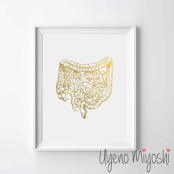 Human Gastrointestinal Tract Anatomy Gold Foil Print Gold Etsy