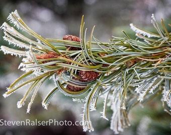 Hoar Frost in the UW Arboretum Color Photograph 2