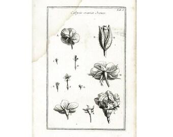 1797 Antique Calyx Sepal Daisy Horsetail Flower Plant Anatomy Print Phytotomy Morphology Corolla Petal Stamen Nature Wall Art To Frame.