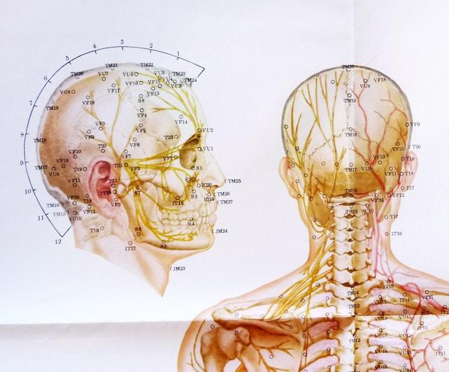 1970 an Bord anatomische XL Körper Meridiane Akupunktur | Etsy