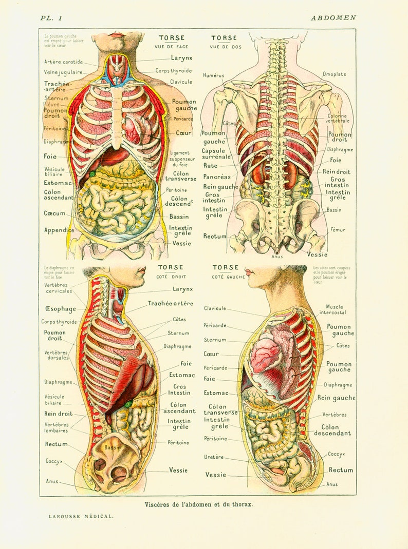 1912 Anatomy Human Body Internal Organs Intestine Liver Kidnet Etsy