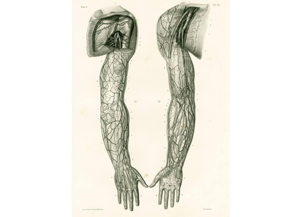 1836 Arterien Körper Muskeln von Arm und Hand anatomische | Etsy