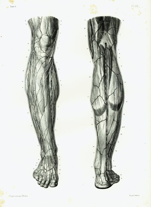 1844 Nerves Muscles Knee Legs Foot Antique Anatomy Muscles Etsy