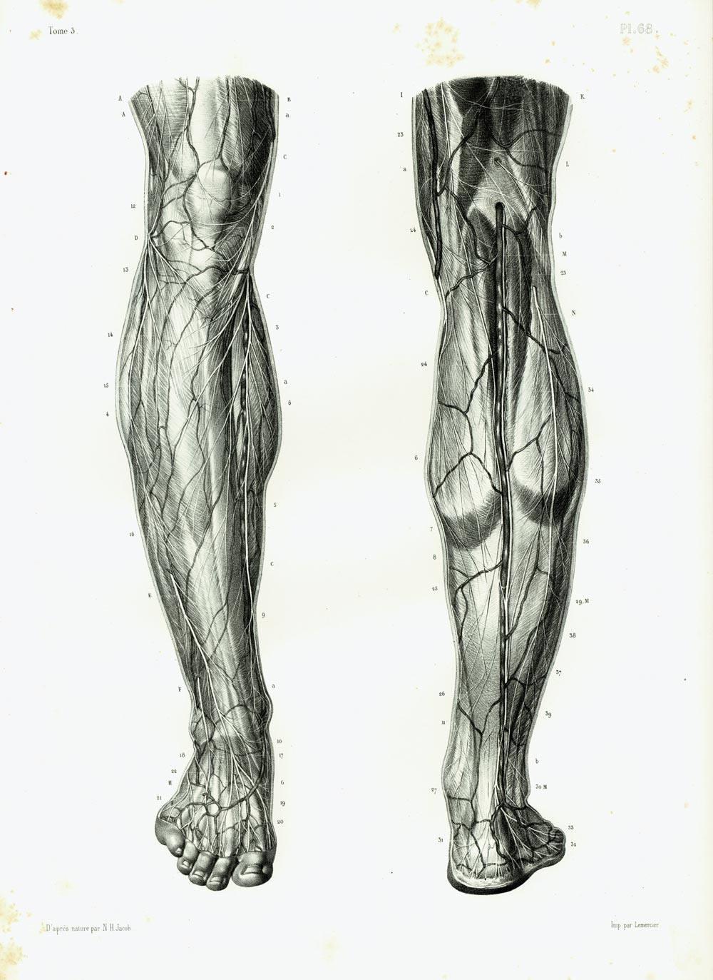 Wunderbar Nerven Des Beines Zeitgenössisch - Menschliche Anatomie ...