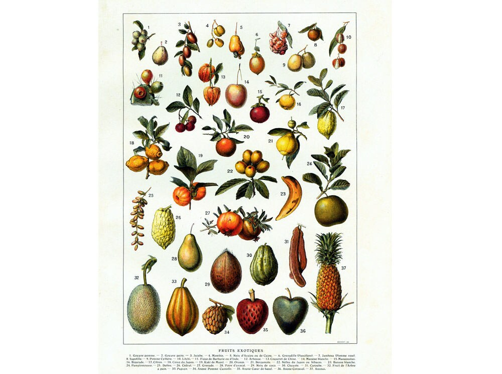 1920 exotische fr chte mango ananas guave litschi. Black Bedroom Furniture Sets. Home Design Ideas