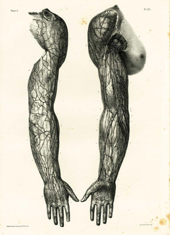 1836 Anatomy Arms Hands Muscles Veins Arteries Lymphatics Etsy