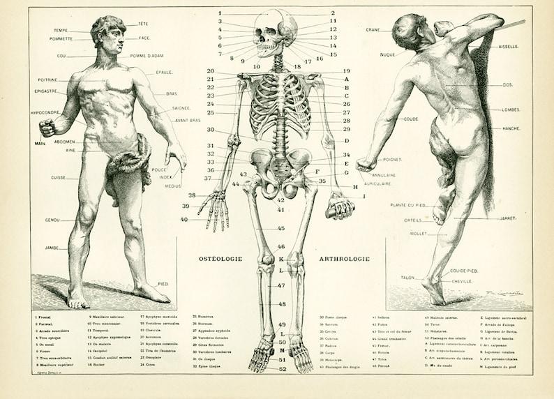 1933 Anatomy Human Body Parts Encyclopedia Larousse Medical Etsy