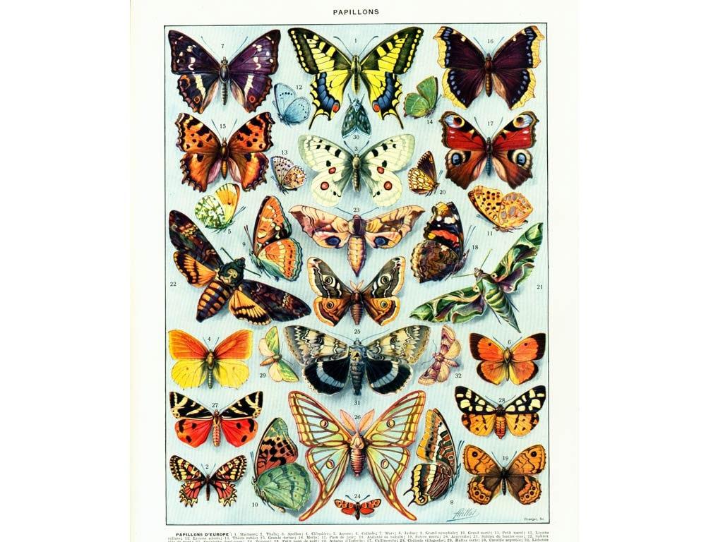 1933 Antique Butterflies identification Chart Print ...  Vintage Butterfly Chart