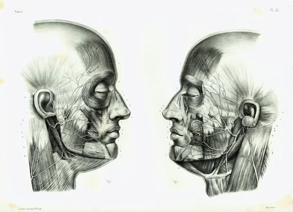 1844 Gesichts Mann Kopf Nerven Anatomie original lebensgroße