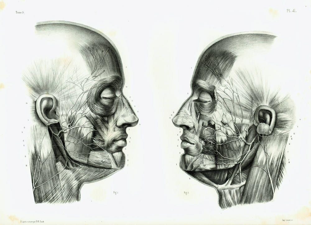 1844 Human Head Anatomy Print Facial Nerve Cranial Nerves Etsy