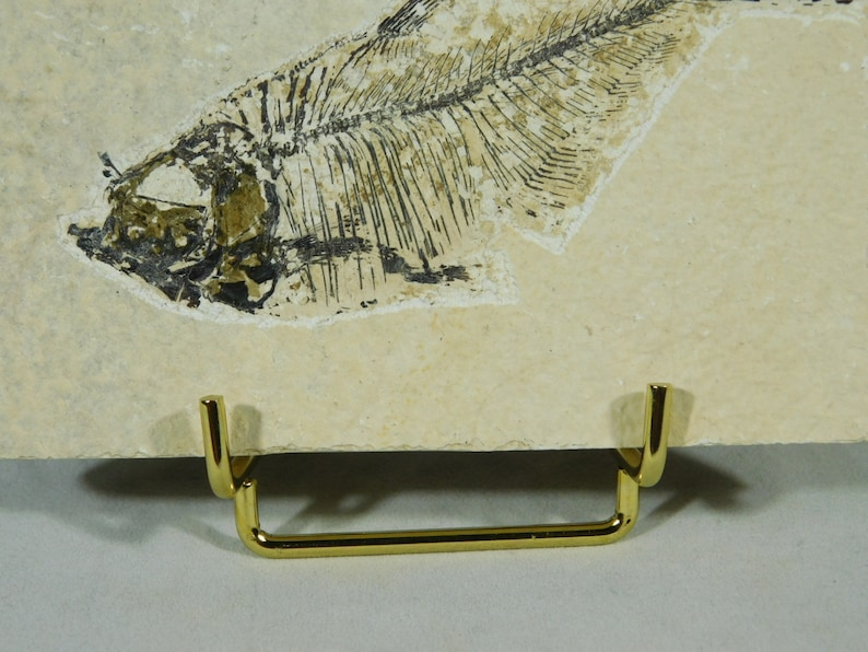 Fossils and More! 1 SMALL Gold Colored Easel Stand for Plates