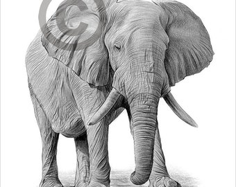 Digital Download - Pencil drawing of an African elephant - Artwork by UK artist Gary Tymon - Instant download