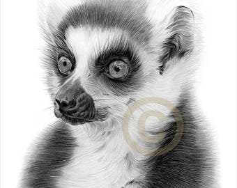 RING-TAILED LEMUR pencil drawing print - wildlife art - artwork signed by artist Gary Tymon - Ltd Ed 50 prints - 2 sizes - animal portrait