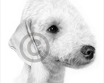 Digital Download - Pencil drawing of a Bedlington Terrier - Artwork by UK artist Gary Tymon - Instant download