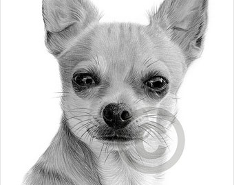 Digital Download - Pencil drawing of a Chihuahua - Toy dog breed - Artwork by UK artist Gary Tymon - Instant download