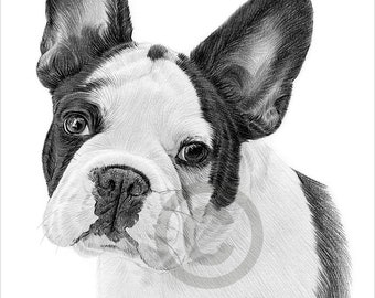 Digital Download - Pencil drawing of a black/white French Bulldog - Toy dog breed - Artwork by UK artist Gary Tymon - Instant download