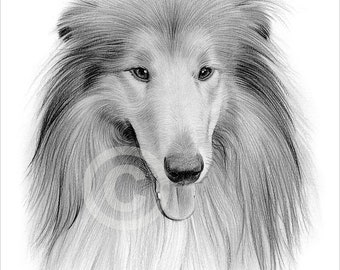 Digital Download - Pencil drawing of a Rough Collie - Artwork by UK artist Gary Tymon - Instant download