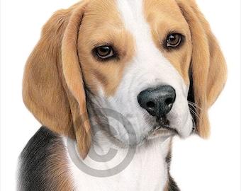 BEAGLE - color pencil drawing print - animal art - artwork signed by artist Gary Tymon - 2 sizes - 100 prints - dog portrait