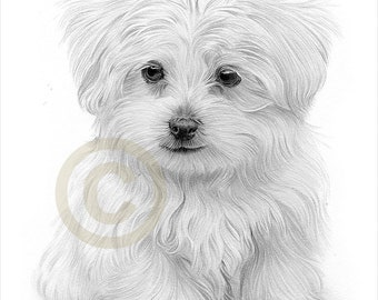 maltese ballerina painting dog art animal  4x6  GLOSSY PRINT