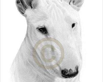 Digital Download - Pencil drawing of an English Bull Terrier - Artwork by UK artist Gary Tymon - Instant download