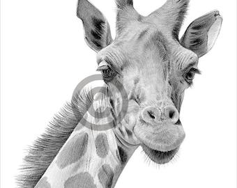 Digital Download - Pencil drawing of an African Giraffe - Artwork by UK artist Gary Tymon - Instant download