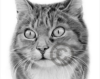 Digital Download - Pencil drawing of an adult Cat - Artwork by UK artist Gary Tymon - Instant download