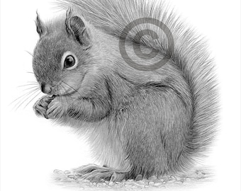 Digital Download - Pencil drawing of a Grey Squirrel - Artwork by UK artist Gary Tymon - Instant download
