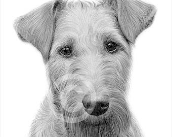 Digital Download - Pencil drawing of an Irish Terrier - Artwork by UK artist Gary Tymon - Instant download
