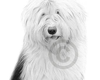 OLD ENGLISH SHEEPDOG - dog portrait - pencil drawing print - artwork signed by artist Gary Tymon - 2 sizes - Ltd Ed 50 prints only - art