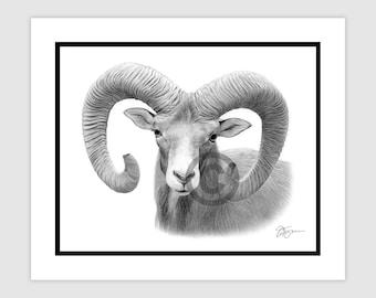 "BIG HORN RAM - Original B&W Pencil Drawing - Portrait size 10"" x 8"" - Mount (matte) size 12"" x 10"" - Signed - animal wildlife art"