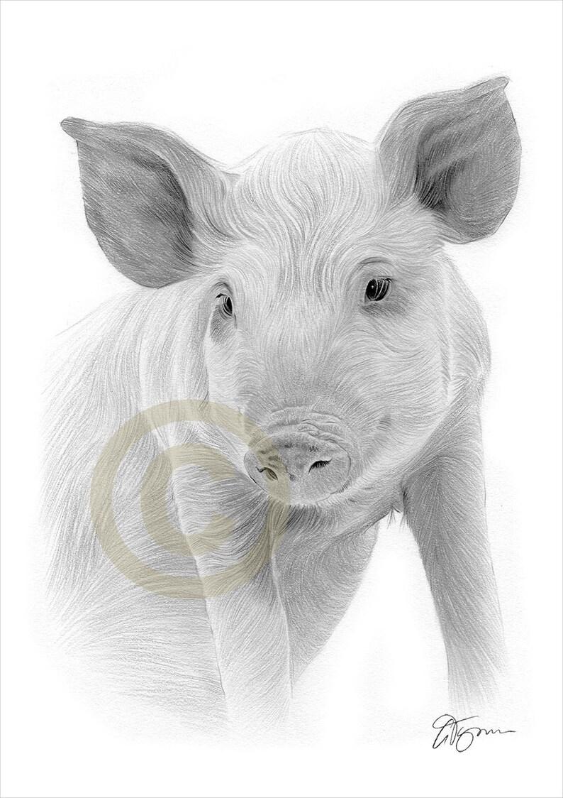 Pig artwork pencil drawing print farm animal signed by artist gary tymon 2 sizes ltd ed 50 prints only pencil portrait