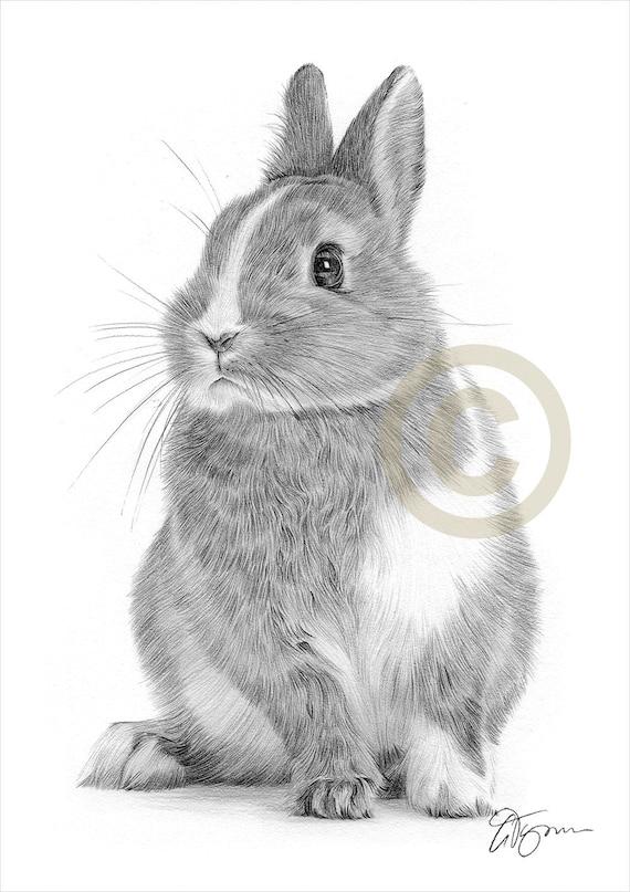 Bunny Rabbit Pencil Drawing Artwork Print Animal Art Etsy