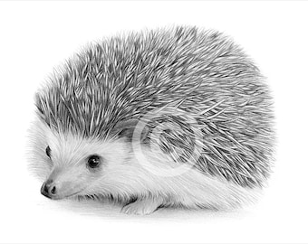 Digital Download - Pencil drawing of a young Hedgehog - Artwork by UK artist Gary Tymon - Instant download
