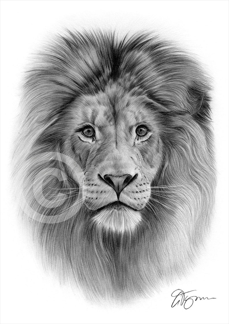 Lion Pencil Art