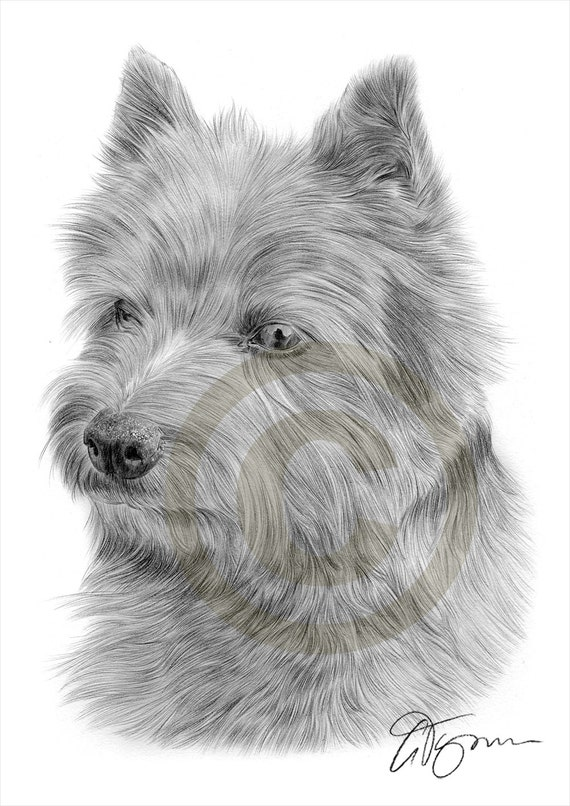 Dog PATTERDALE TERRIER pencil drawing art print A3 A4 sizes signed