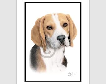 """BEAGLE Original Color Pencil Drawing - dog art - Portrait size 11.75"""" x 8.25"""" - Mount (matte) size 14"""" x 11"""" - Signed by artist"""