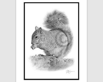 "SQUIRREL - Original B&W Pencil Drawing - Portrait size 11.75"" x 8.25"" - Mount (matte) size 14"" x 11"" - Signed - animal wildlife art"