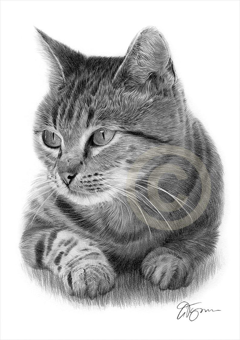 Tabby cat pencil drawing print cat art artwork signed by artist gary tymon 2 sizes ltd ed 50 prints only animal portrait