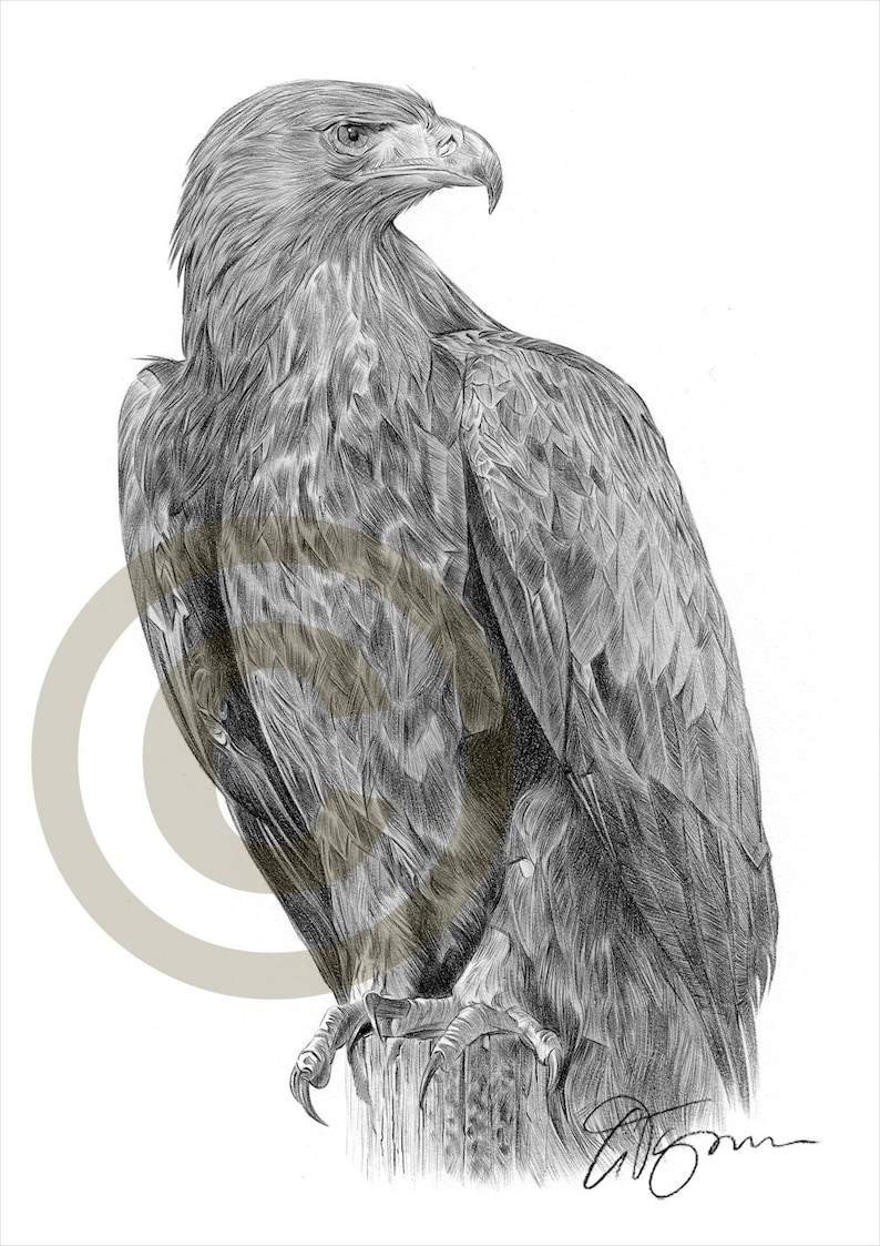 Bird artwork golden eagle pencil drawing print artwork signed by artist gary tymon ltd ed 50 prints only 2 sizes pencil portrait