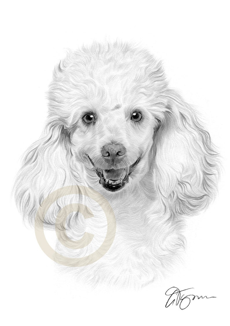 0cf7326533e7 Poodle pencil drawing print artwork signed by artist Gary | Etsy