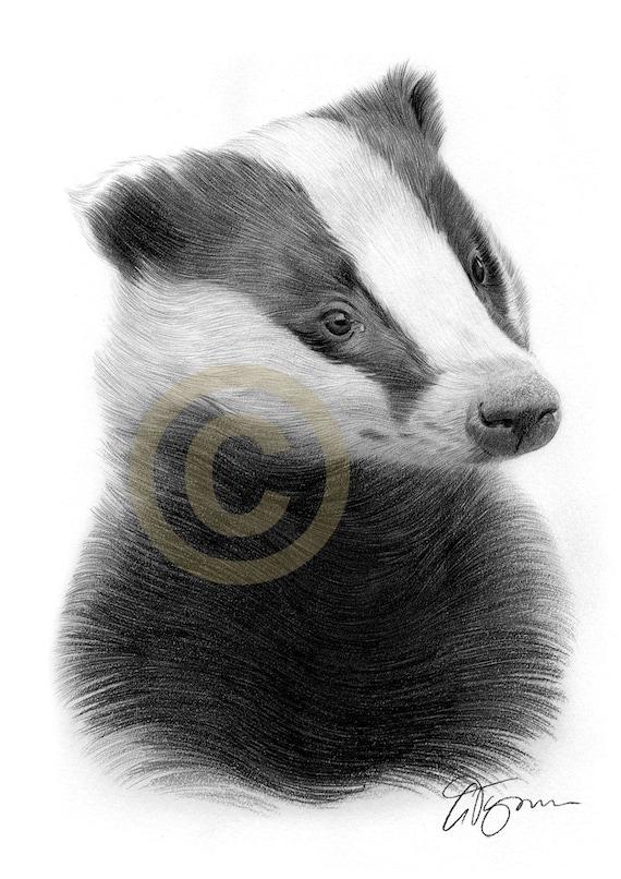 LIMITED EDITON PRINT signed wildlife nature original BADGER wildlife watercolour