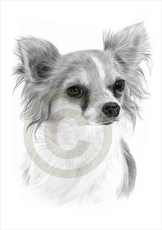 Chihuahua Calendar Portrait A4