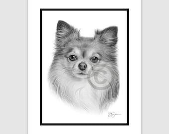 "Young CHIHUAHUA - Original B&W Pencil Drawing - Portrait size 8"" x 6"" - Mount (matte) size 10"" x 8"" - Signed - Dog art"